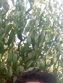 Аватар: Hamid1101